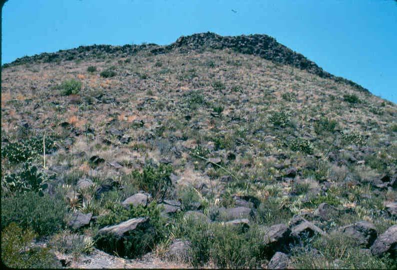 Desert Scrub Vegetation