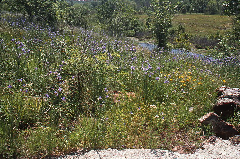 Grassland slides range types of north america glory of the glades the vernal society of native vegetation of a chert glade dominated by forbs such as ohio spiderwort yellow or nuttalls stonecrop publicscrutiny Image collections