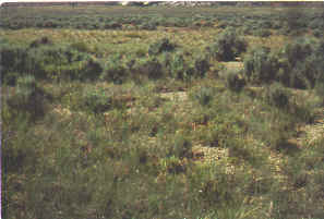 Shrublands range types of north america plains grassland and high desert blend in a broad ecotone with varying amounts of big sagebrush and various herbaceous communities depending on range site fandeluxe Gallery