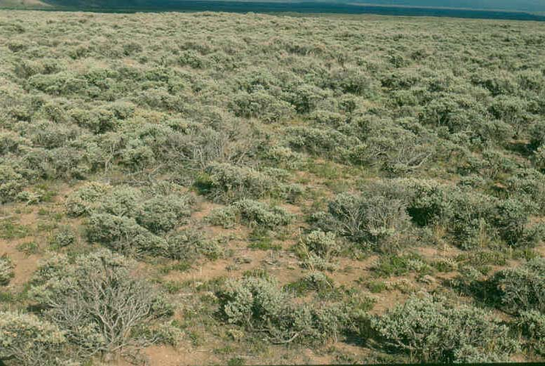 Shrub Steppe General Earance Of A Having Mountain Sagebrush As The Dominant No Other Woody Species Were Encountered And