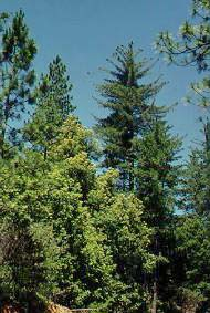 montane forest features